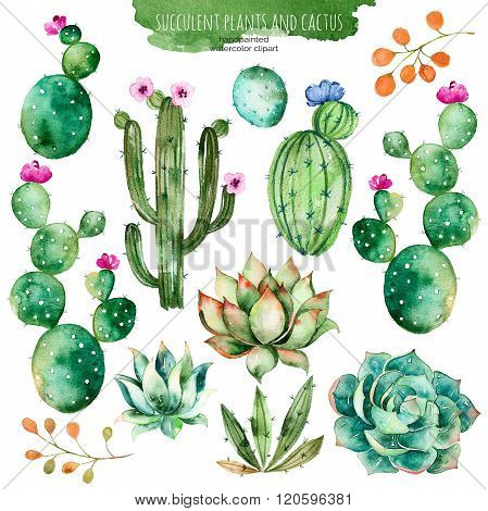 Set of high quality hand painted watercolor elements for your design with succulent plants,cactus an