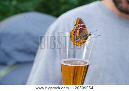 Butterfly Drinking Sparkling Wine Horizontal
