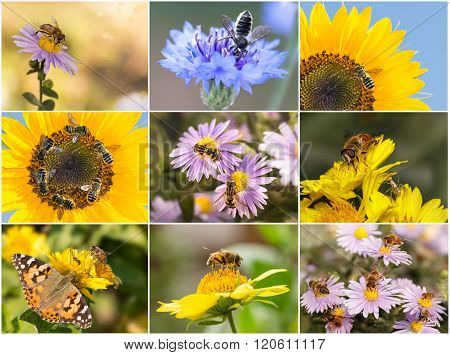 A Collage Of Photos Of bees. Closeup Bees, Spiders, Hoverflies And Butterfly.