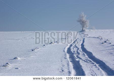 Alone tree in the winter field