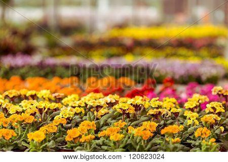 Different Plants In Orangery