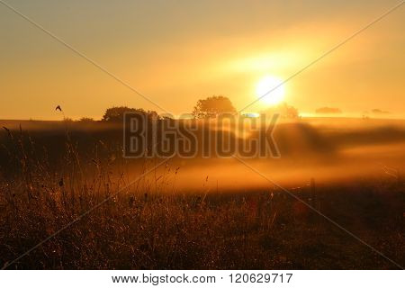 A lovely morning at sunrise on a foggy meadow