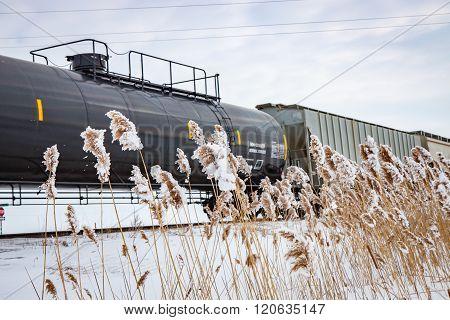 Railway Train In Winter With Frozen Cattails