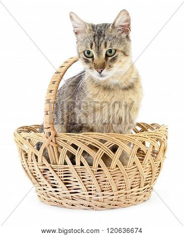 Isolated Cat In Basket.