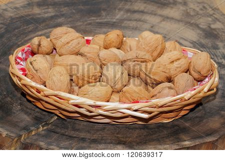 Freshly harvested walnuts in a basket, Thanksgiving