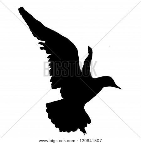close up seagull bird silhouette in flight