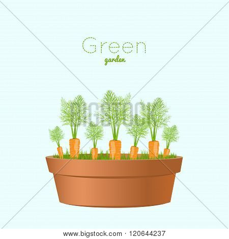 Vegetable Carrots Garden. Carrots In A Pot. Vector Illustration For Garden Party