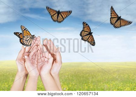 Hands Releasing Butterflies On Meadow