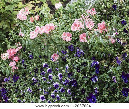 Flowers in a garden park.