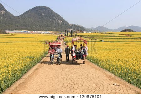Luoping, China - February 28, 2016: Man Riding A Waterbuffalo For The Tourists Among The Rapeseed Fl