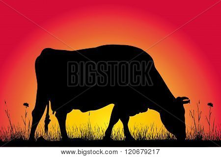 grazing cow silhouette