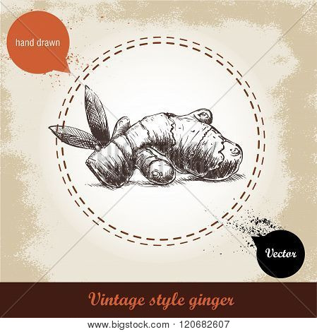 Ginger root illustration. Vintage retro background with hand drawn sketch ginger root. Herbs and spi