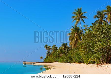 Tropical beach at Maldives - vacation background