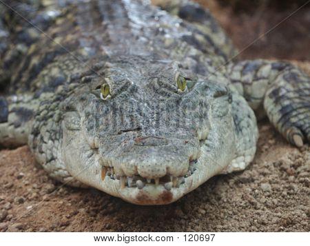 Scary Croc