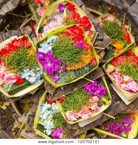 Herbs of Sacrifice on Bali
