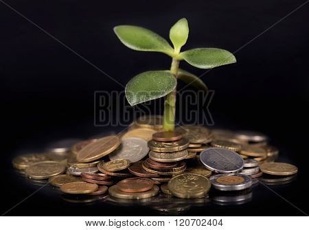 plant growing out of gold coins
