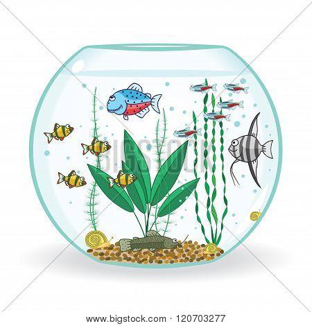fishbowl with inhabitant, vector illustration