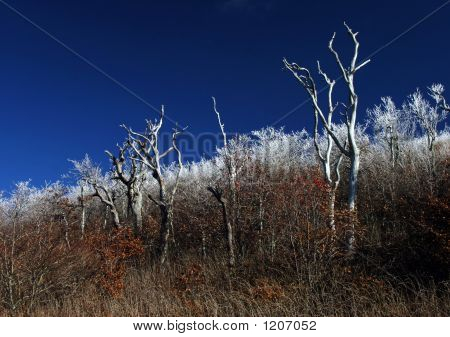 Frost Line Branches