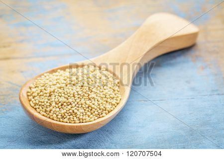 amaranth grain on a wooden spoon against blue painted grunge wood