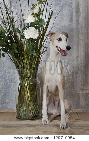 Whippet Dog With A Vase Of Flowers