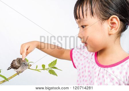 Asian Little Chinese Girl Petting A Small Cuckoo