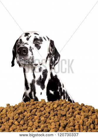Dog Do Not Want To Eat Dry Food. He Prefers Meat And Natural Products
