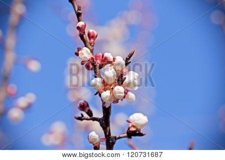 Awakening of nature - beautiful gentle buds