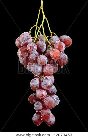 Grape With Waterdrops
