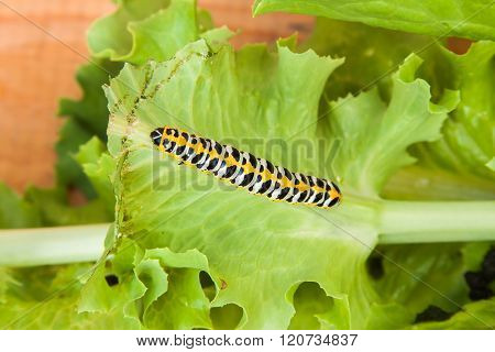 Bright Colourful Worm