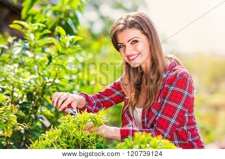 Beautiful gardener pruning little tree, green sunny nature