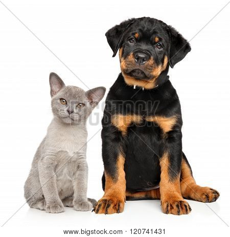 Cat And Dog Together On A White