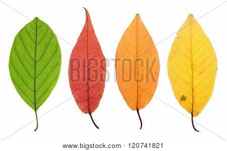Yellowing Leaf Stage
