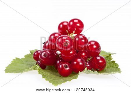 twig of red currant on green leves isolated on white background.