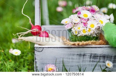 Garden Time, Radishes, Daisies