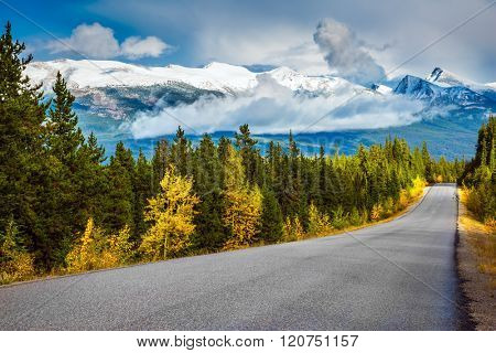 The road goes into the distance. Canadian Rockies. Beautiful September day. Great Highway is among the mountains and forests yellowed