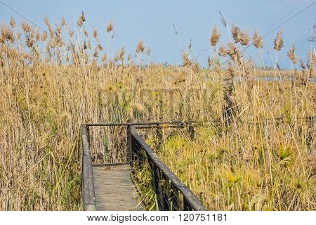 The narrow bridge to go among the marsh grass. Hula Nature Reserve, Israel, December. Lake Hula is a wintering place for migratory birds