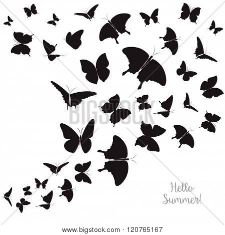 Background with Black Butterflies Isolated on White. Summer and Spring Banner.