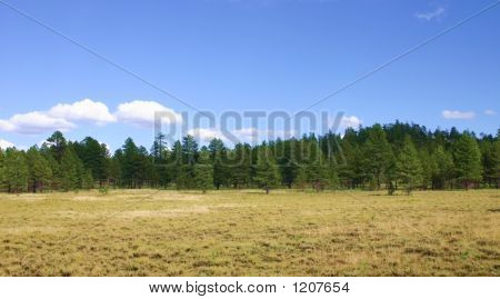 Yosemite Meadow In Fall With Pines