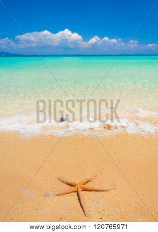 On a Beach Sea Starlet