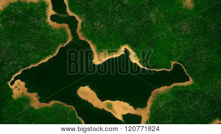 Satellite View of Wild Green Lush Nature Area
