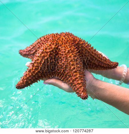 beautiful colorful starfish in girl hands