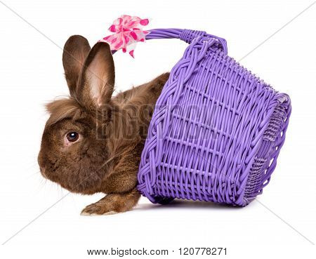 Cute Chocolate Colored Easter Rabbit With A Purple Basket