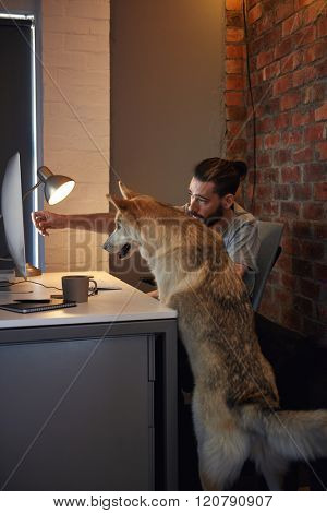 Curious husky dog pet  at owner's desk looking at the computer screen