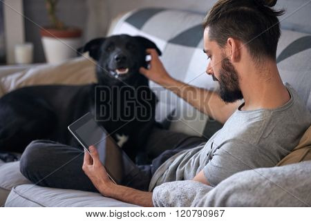 Dog owner petting and scratching his pet on the couch sofa, while surfing the internet on his tablet device, a loving affectionate relationship