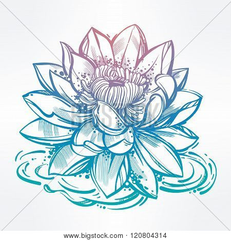 Sketch of lily lotus flower in linear style.