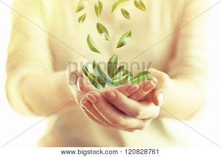 Green leaves falling into woman hands, close up