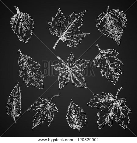 Chalk leaves sketch on blackboard