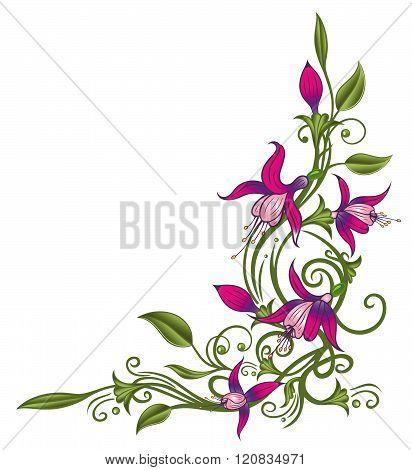 Flowers, fuchsia