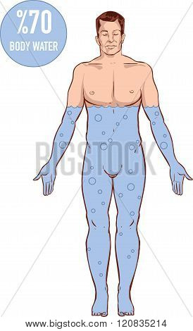 Vector Illustration Of A  Water Rate In The Human Body