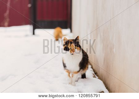 Portrait of homeless cat looking at camera